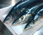 夕飯は秋刀魚!